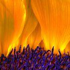 Solar Flares by sailorsedge