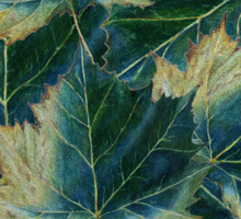 Leaves drawing  Sticker