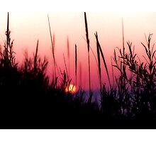 Sunset in Beach Grass II Photographic Print