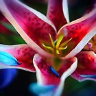 Blue Petals on a Stargazer Lily by bloomingvine