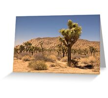 Desert Palm Greeting Card