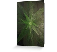 Plant close up overhead. Greeting Card
