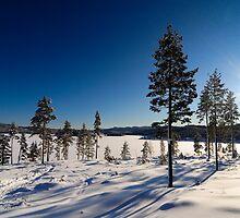 Winter day by Lambertfoto