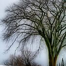 Tree Elder by Deborah  Benoit