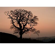Lone tree at sunset in Devon Photographic Print