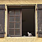 French window peepers by triciamary