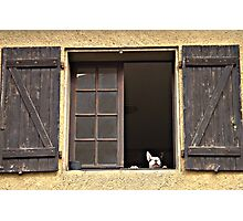 French window peepers Photographic Print