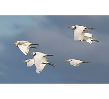 Heading For The Roost Photographic Print