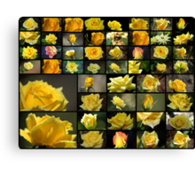 50 Yellow Roses Canvas Print