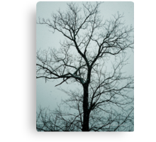 Lonely Tree Waiting For Spring | Center Moriches, New York  Canvas Print