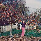 Picking Persimmons by Edward Henzi