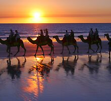 Cable Beach Camels At Sunset by Gina Ruttle  (Whalegeek)