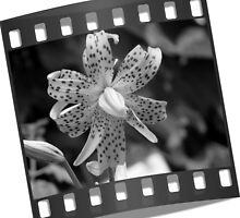 Film Strip 35 mm by Waterl00