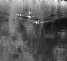 Geese at Clemson by Artlife