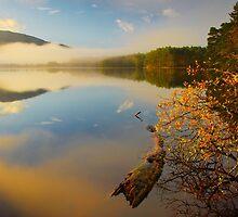 Morning at loch Garten, Scotland by bakuma