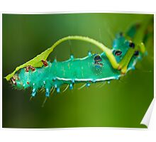 The Clappy Caterpillar  Poster