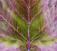 Leaf drawing Sticker