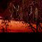 Red susnset with close tree silhouette. Winton, Qld . Australia by Marilyn Baldey