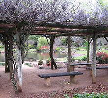A wisteria covered shelter at the Japanese Gardens , Toowoomba. Qld. Australia by Marilyn Baldey