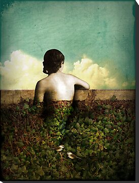 The view by Catrin Welz-Stein