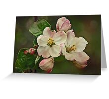 Apple Blossom Time #1 Greeting Card