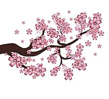 Blooming Sakura Branch Photographic Print