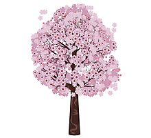 Blooming Sakura Tree Photographic Print