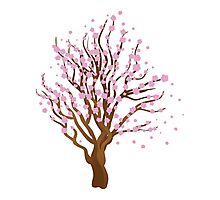 Blooming Sakura Tree 2 Photographic Print