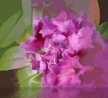 abstract of deep pink Rhodedendron. by hilarydougill