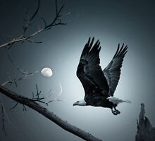 Night Flight  by Bonnie T.  Barry