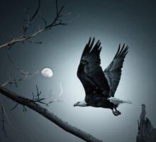 Night Flight  by Bonnie T.  Barry
