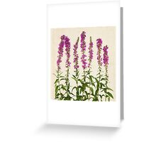 Purple Wildflowers on Aged Paper Greeting Card