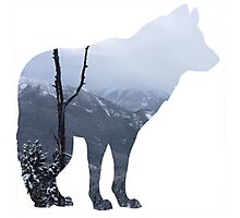 Mountain Wolf Photographic Print