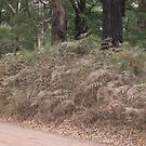 Stifled Ferns on a dusty road in the bush by oiseau
