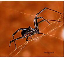 Electric Orange Slide    ( Black Widow Series) Photographic Print