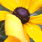 Sunny Folded Petal by ionclad