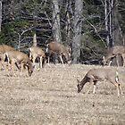 Doe...a deer...a female deer by vigor