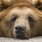 Like a bear with a sore head... by AJM Photography