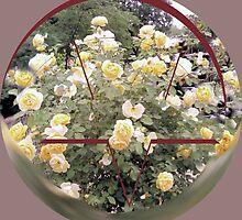 Yellow Roses by Amir Salek