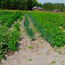 My Veggie Garden by MaeBelle