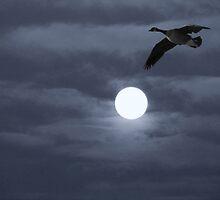 Moonlit Flight by janetlee
