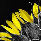 Selective Colour Sunflower by GayeL Art