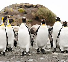 Penguins Six by Phill Danze
