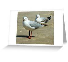 Silver Gull Australia Greeting Card
