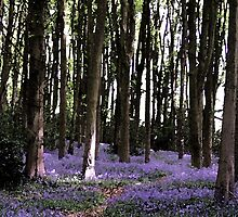 Lilac Bluebells Woodland Landscape Watercolour Scene by HotHibiscus