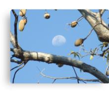 Moony Boab Canvas Print