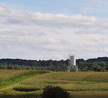 The Vast Corn Field by vigor