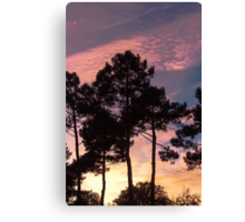 Sunset - Clouds, wind and trees Canvas Print