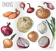illustration of retro organic Onions set Poster