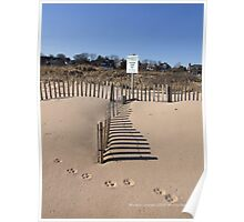 Paw Prints in the Sand - East Beach Watch Hil, RI Poster